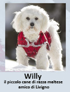 vai al blog di Willy
